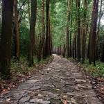 rainforest vietnam_sachman75_150