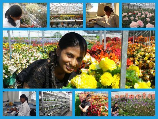 Im Gewächshaus gewann Sewwandi Gayani Chandrasekera Einblicke in die Zierplflanzenzucht © privat